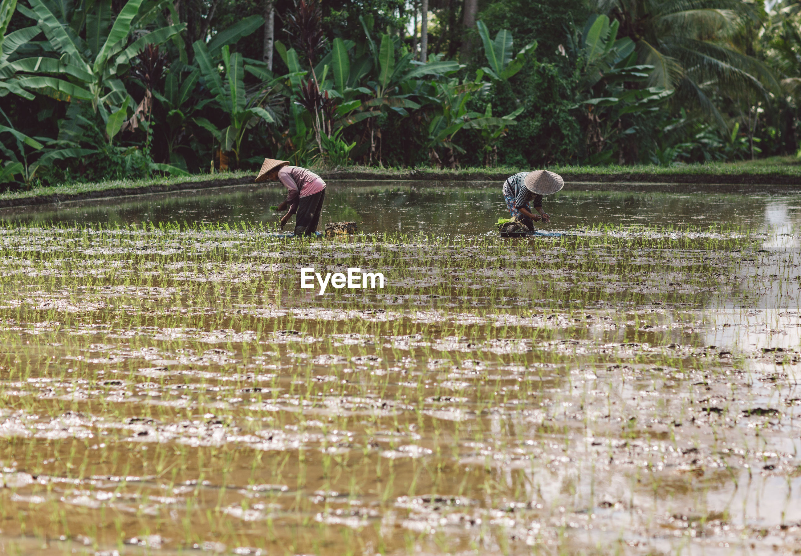 PEOPLE WORKING IN FIELD