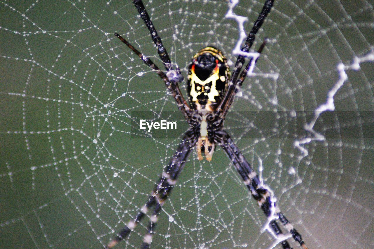 animal themes, animal, spider web, fragility, animal wildlife, one animal, close-up, animals in the wild, invertebrate, arachnid, spider, arthropod, insect, vulnerability, focus on foreground, no people, survival, nature, animal body part, macro, outdoors, animal leg, complexity, web, purple