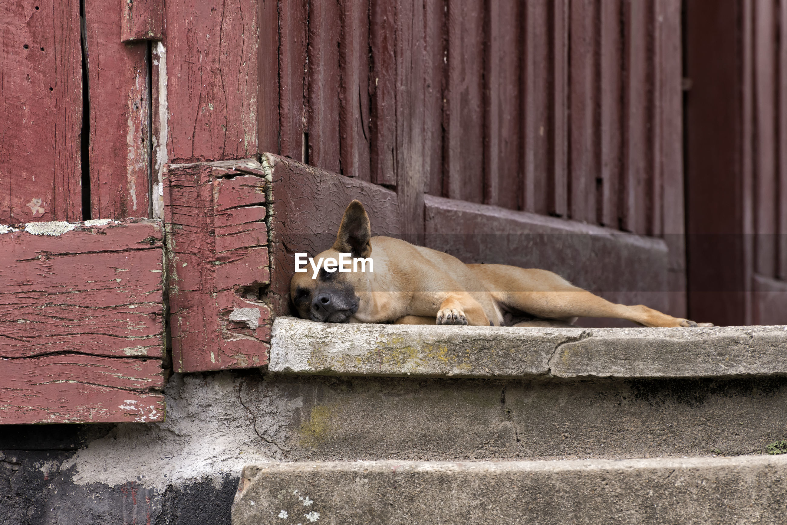 Low angle view of dog relaxing on wall