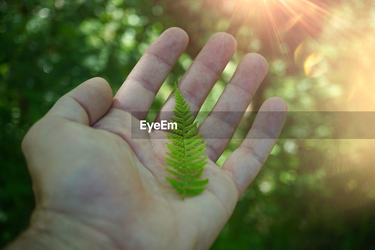 human hand, human body part, hand, one person, real people, unrecognizable person, body part, plant, personal perspective, nature, green color, day, close-up, sunlight, focus on foreground, human finger, finger, lifestyles, selective focus, outdoors, lens flare, human limb