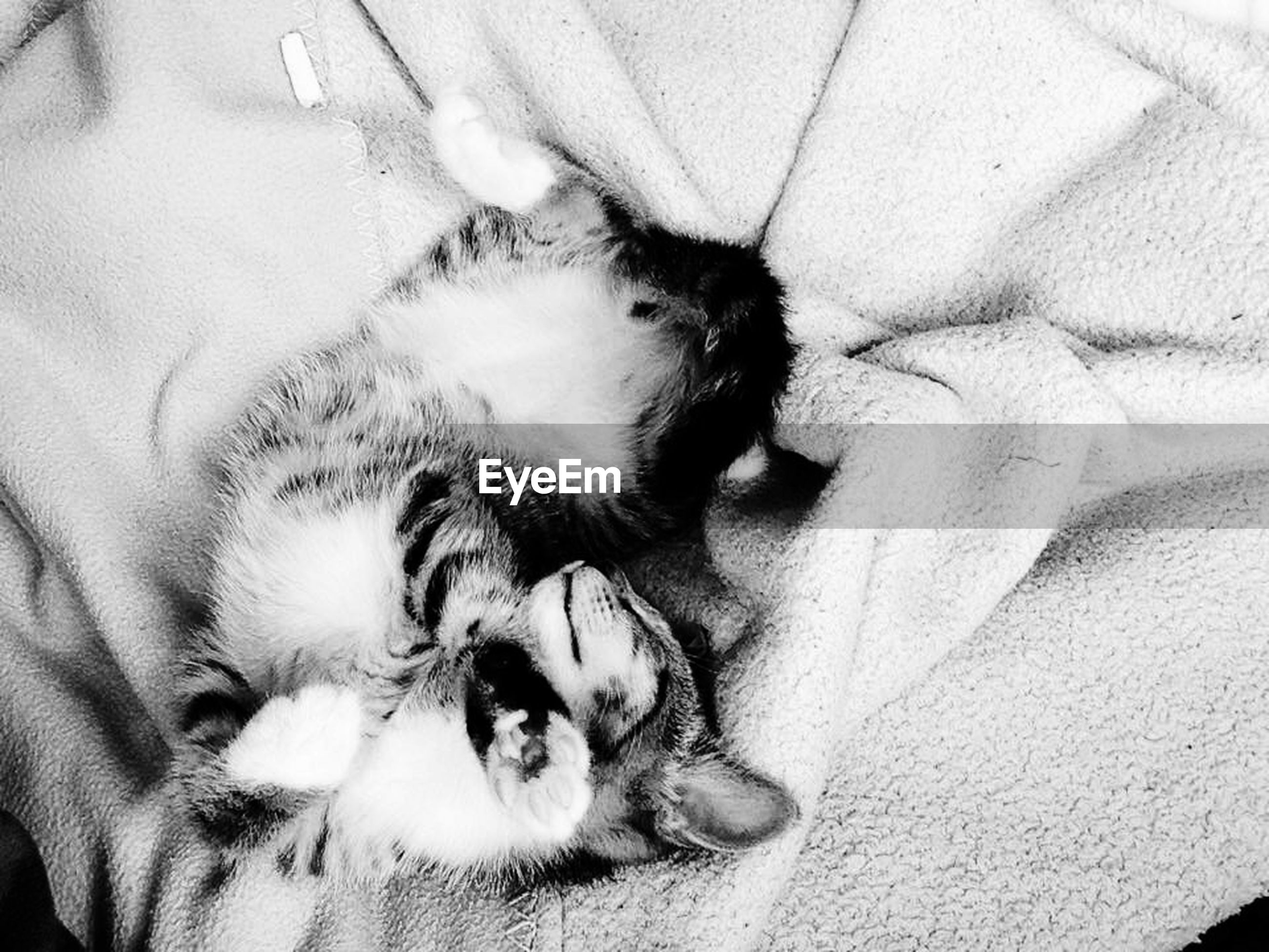 pets, domestic animals, mammal, animal themes, one animal, relaxation, indoors, resting, sleeping, lying down, domestic cat, cat, dog, bed, eyes closed, feline, sofa, home interior, comfortable, high angle view
