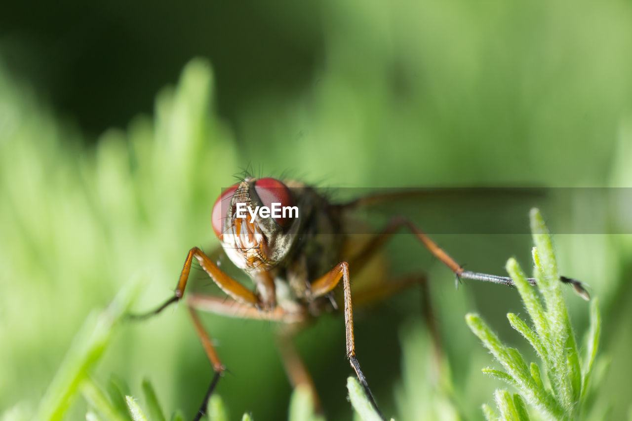 Invertebrate Animals In The Wild Insect Animal One Animal Animal Themes Animal Wildlife Close-up Selective Focus Leaf Plant Part Green Color Day Zoology Arthropod Nature Plant No People Arachnid Animal Body Part Outdoors Animal Eye