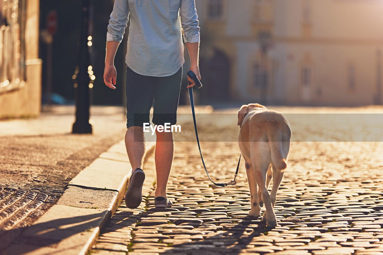 Rear View Of Man With Dog Walking On Cobblestone