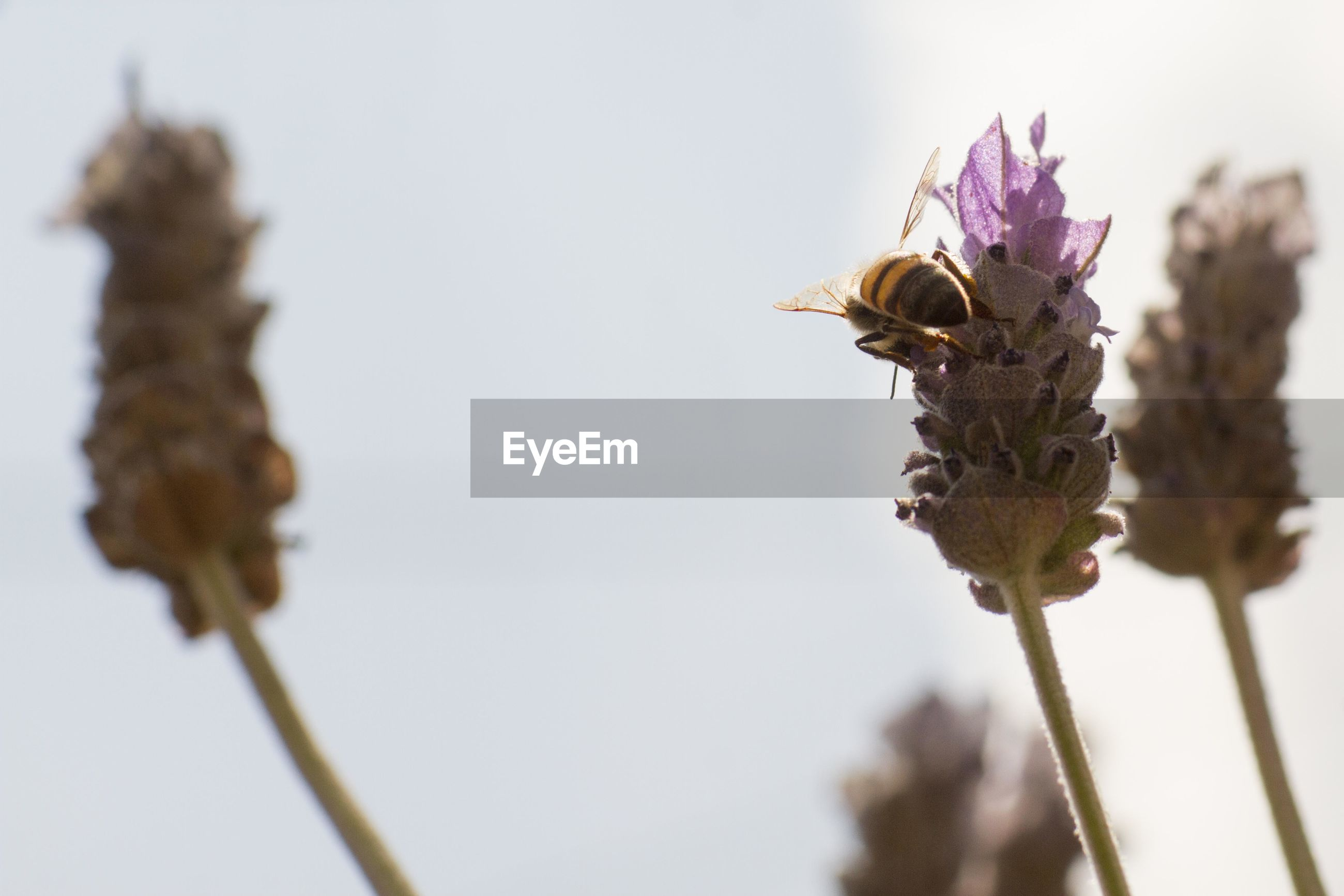 Close-up of bee on purple flowering plant