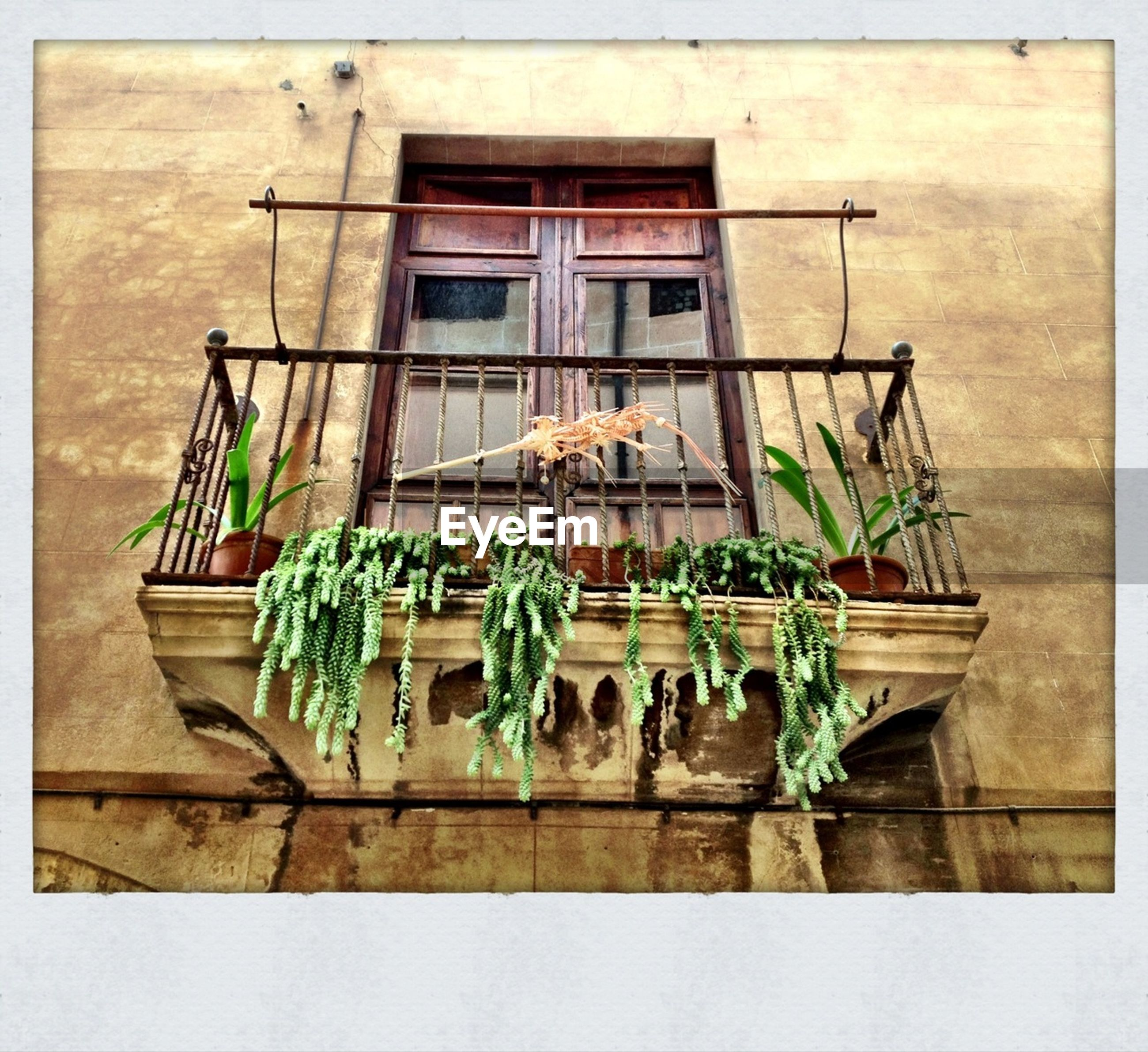 Low angle view of balcony with plants