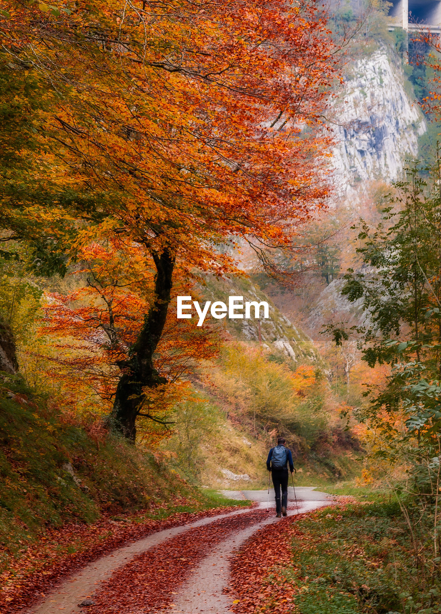 REAR VIEW OF MAN WALKING ON ROAD AMIDST AUTUMN TREES