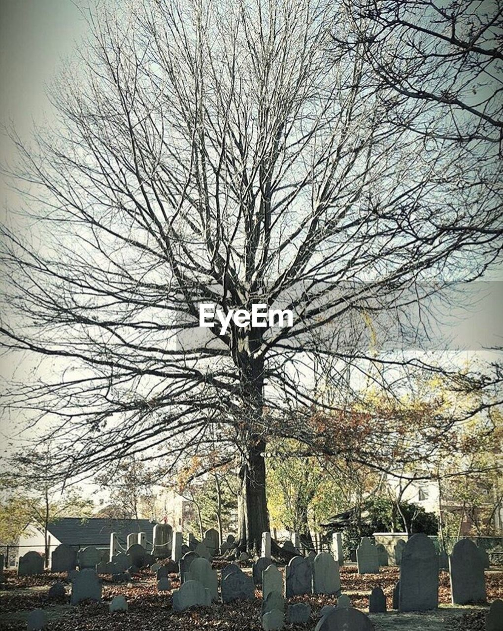 tombstone, cemetery, bare tree, tree, memorial, graveyard, gravestone, grave, sadness, cross, branch, tranquility, outdoors, day, no people, nature, sky