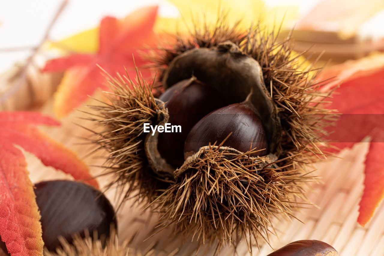 food and drink, food, no people, close-up, healthy eating, chestnut - food, selective focus, freshness, wellbeing, nut, still life, nut - food, fruit, chestnut, day, focus on foreground, brown, nature, indoors, leaf, ripe