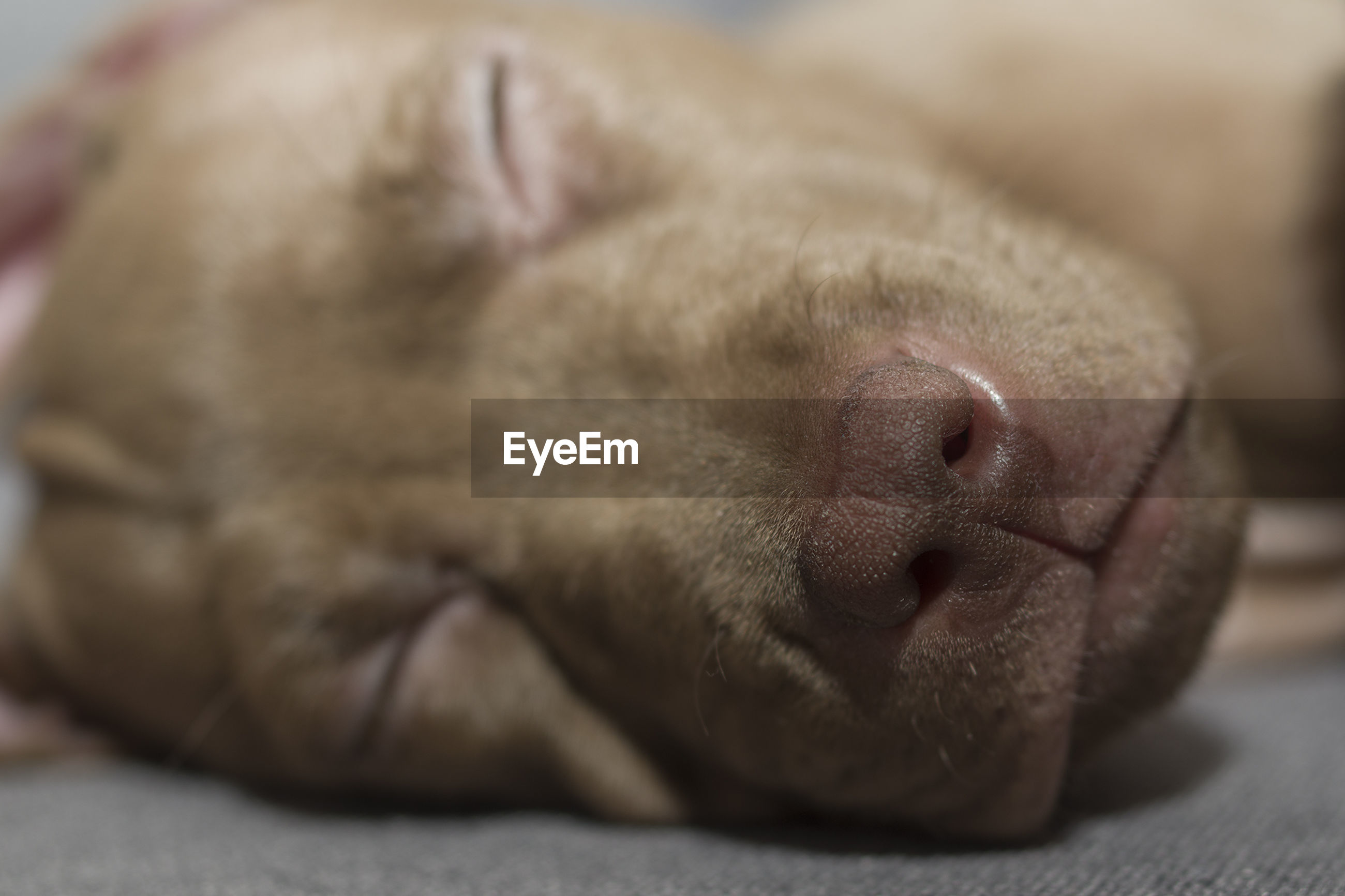 Close-up of dog sleeping on floor
