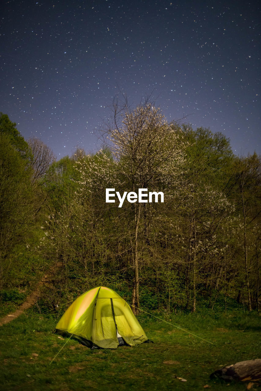 tree, plant, sky, tent, camping, field, beauty in nature, scenics - nature, nature, night, star - space, land, star, tranquility, tranquil scene, no people, green color, yellow, landscape, grass, outdoors