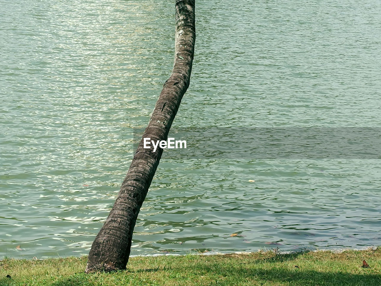 water, lake, nature, day, outdoors, tranquility, no people, tree trunk, green color, beauty in nature, tree, growth, grass