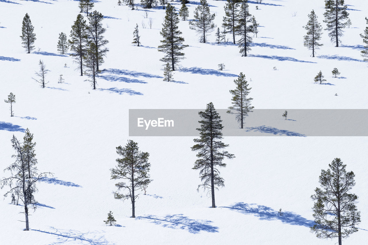 Trees on snow covered field