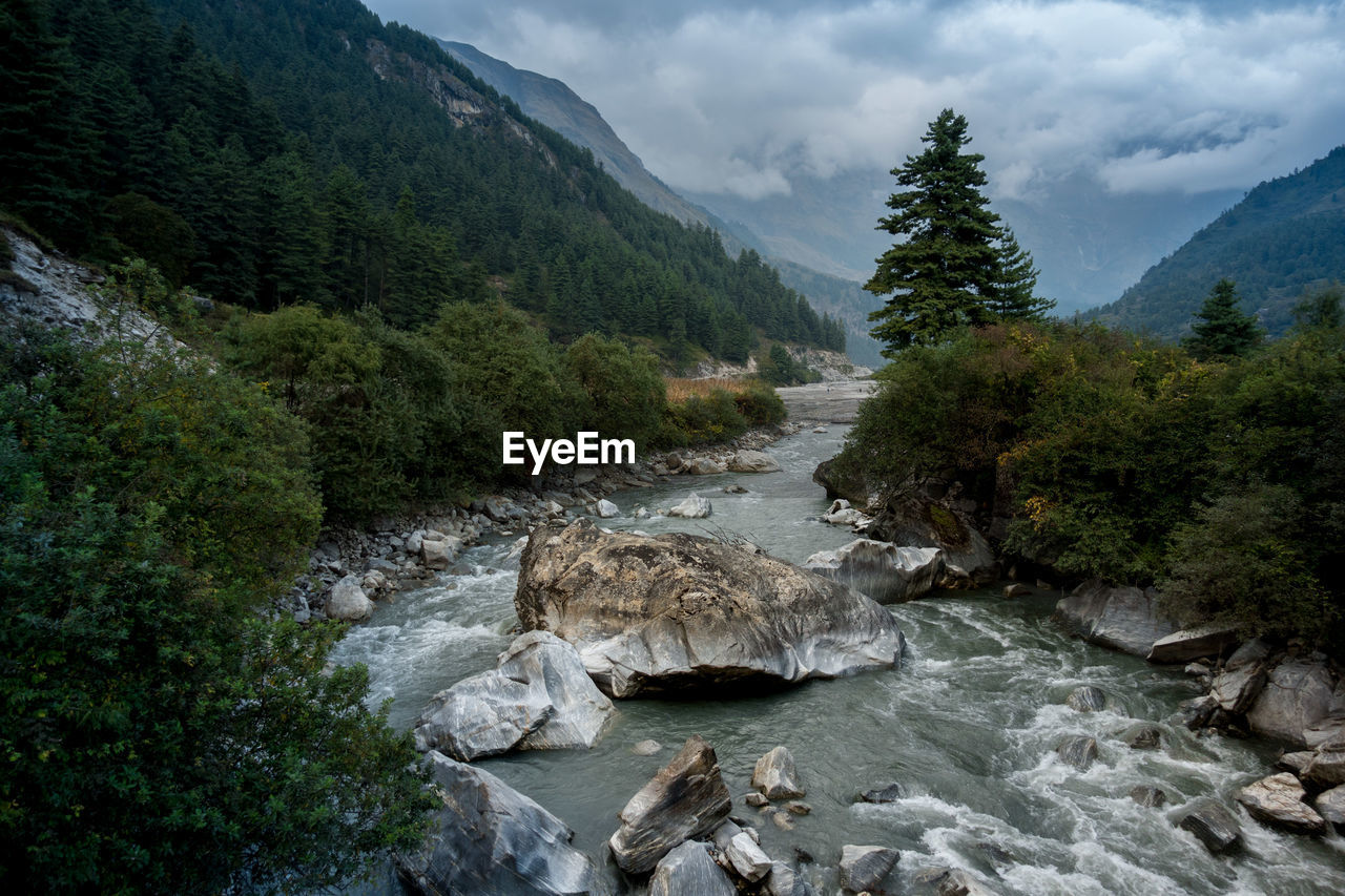 water, plant, tree, beauty in nature, nature, scenics - nature, rock, sky, river, no people, non-urban scene, flowing water, mountain, rock - object, environment, land, solid, day, motion, flowing, outdoors, stream - flowing water
