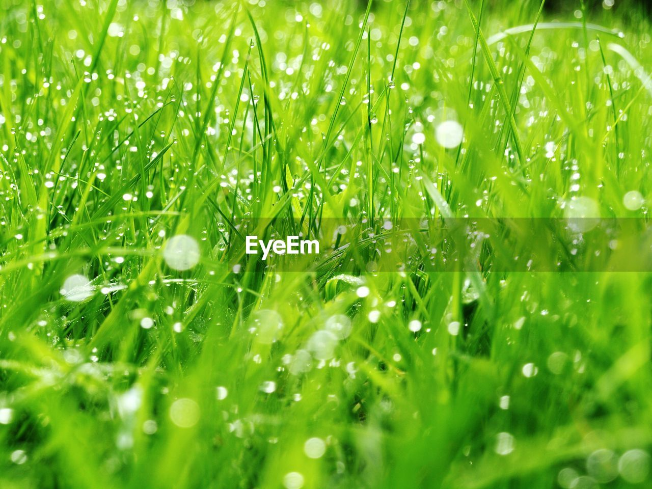 green color, drop, wet, plant, water, selective focus, growth, full frame, beauty in nature, freshness, close-up, nature, backgrounds, grass, no people, blade of grass, plant part, dew, leaf, rain, outdoors, raindrop, purity