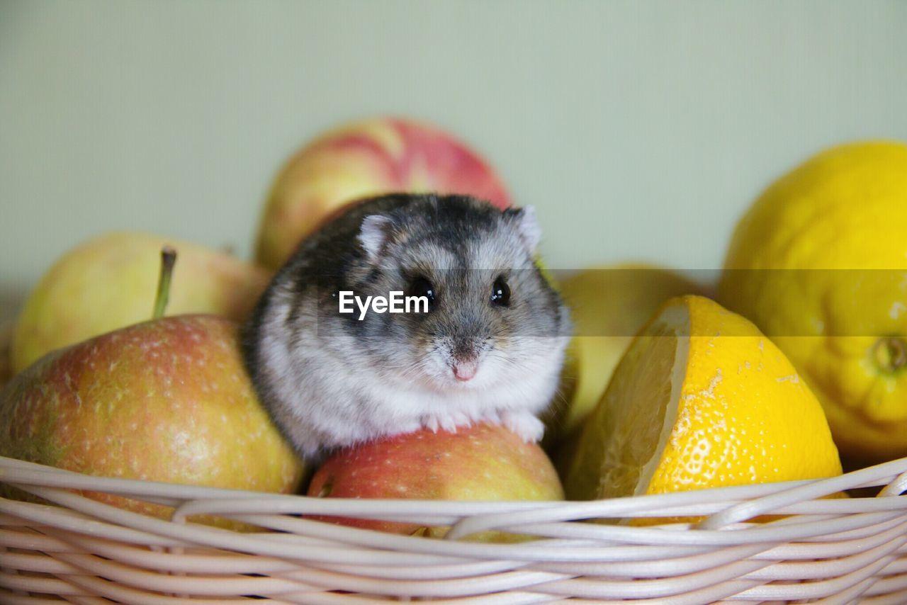 Cute hamster indoors
