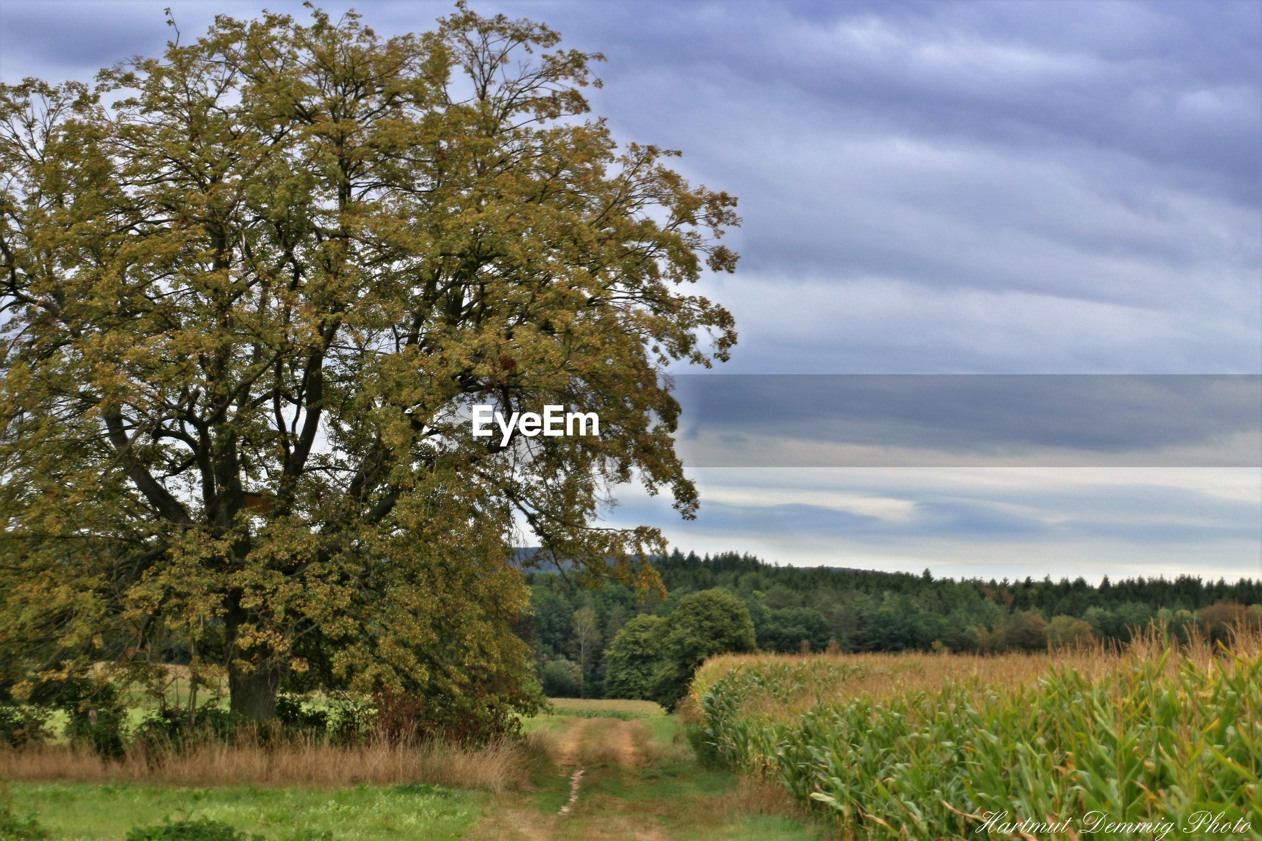 tree, tranquil scene, grass, tranquility, landscape, growth, field, sky, scenics, beauty in nature, cloud - sky, nature, plant, green color, grassy, non-urban scene, day, cloud, rural scene, footpath, countryside, outdoors, blue, no people, solitude, green, agriculture, cloudy, cultivated land, grass area, freshness, remote