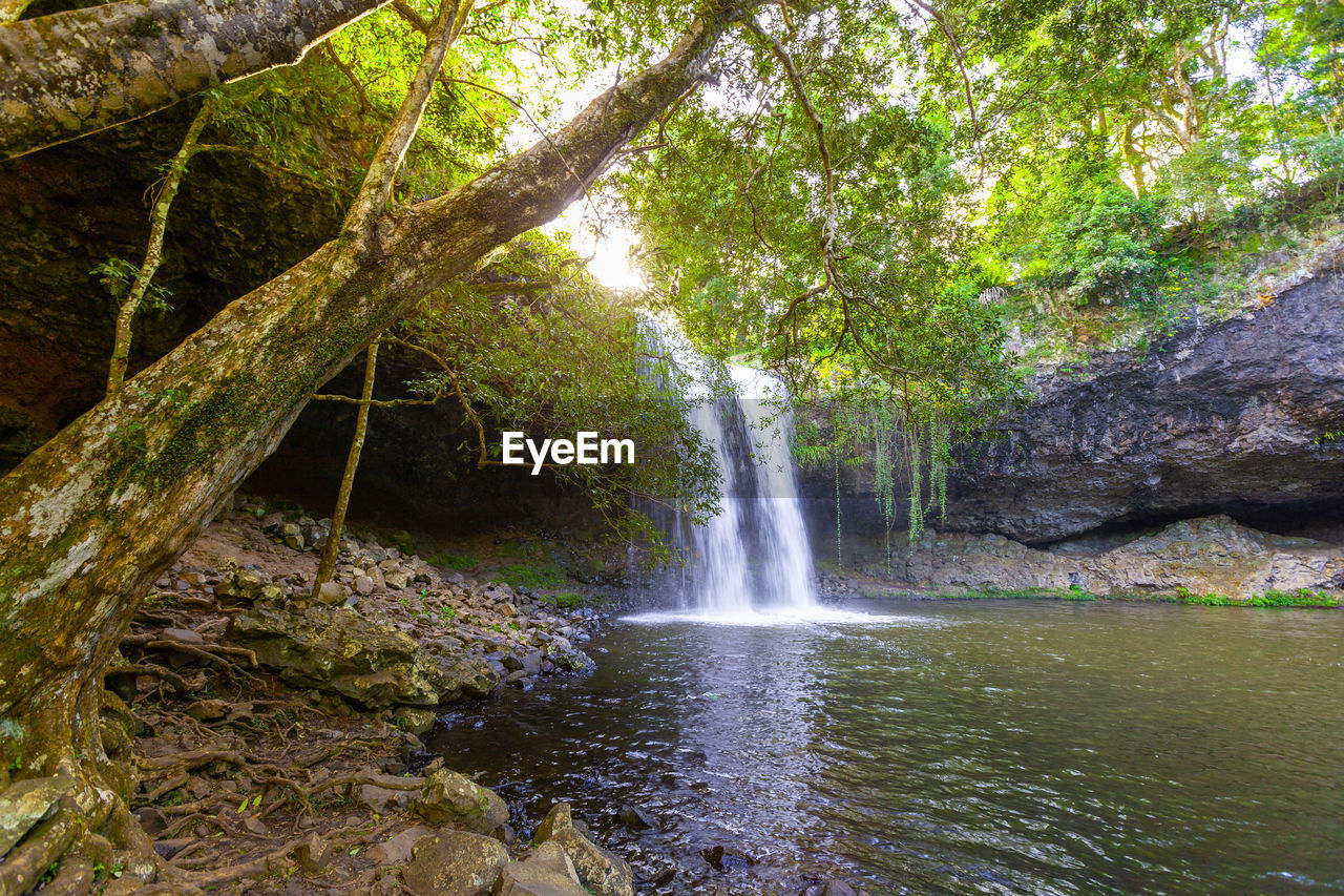 water, tree, forest, beauty in nature, motion, plant, waterfall, land, scenics - nature, flowing water, nature, long exposure, rock, no people, environment, rock - object, day, blurred motion, flowing, rainforest, outdoors, power in nature, falling water, stream - flowing water
