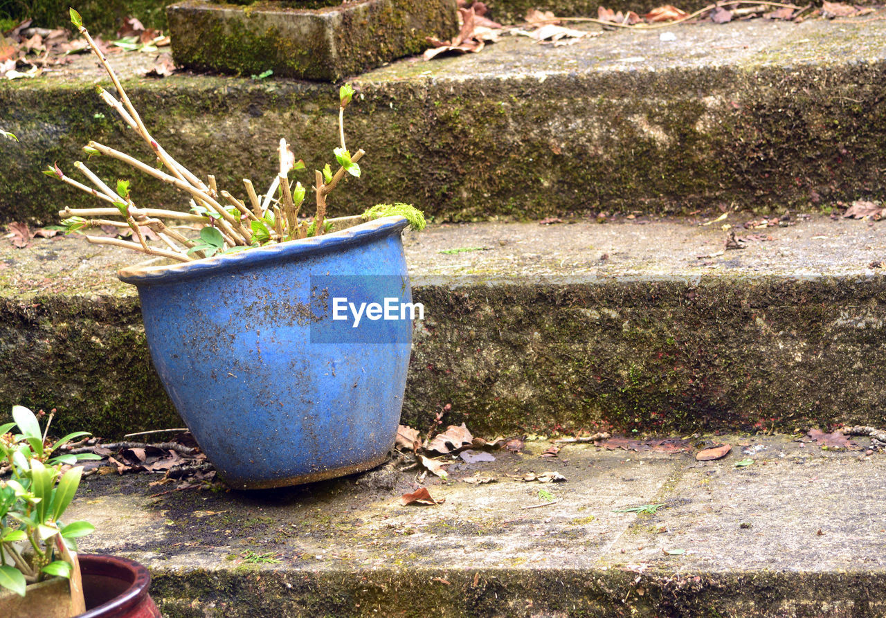 growth, plant, day, outdoors, no people, potted plant, nature, blue, grass, leaf, close-up, flower, tree, beauty in nature
