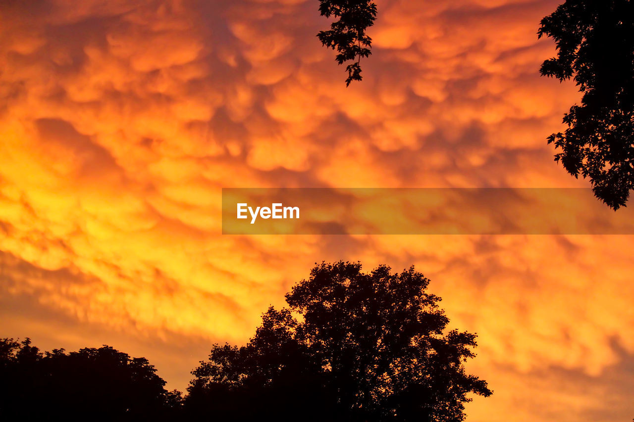 tree, sunset, silhouette, orange color, beauty in nature, sky, nature, growth, scenics, tranquility, no people, dramatic sky, tranquil scene, outdoors, low angle view, cloud - sky, branch, day