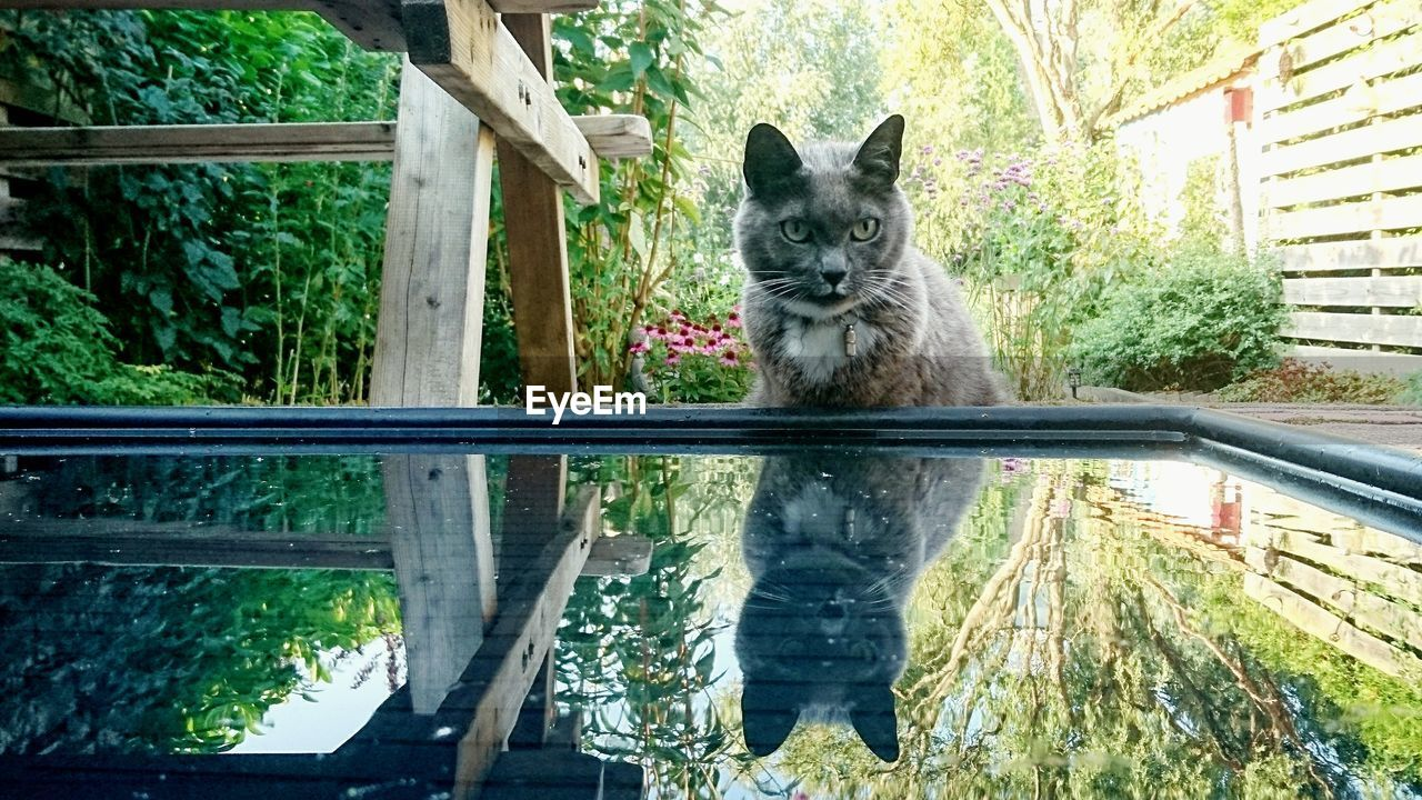 one animal, mammal, animal themes, pets, domestic, animal, domestic animals, cat, feline, domestic cat, vertebrate, looking at camera, portrait, window, day, no people, plant, railing, glass - material, nature, whisker