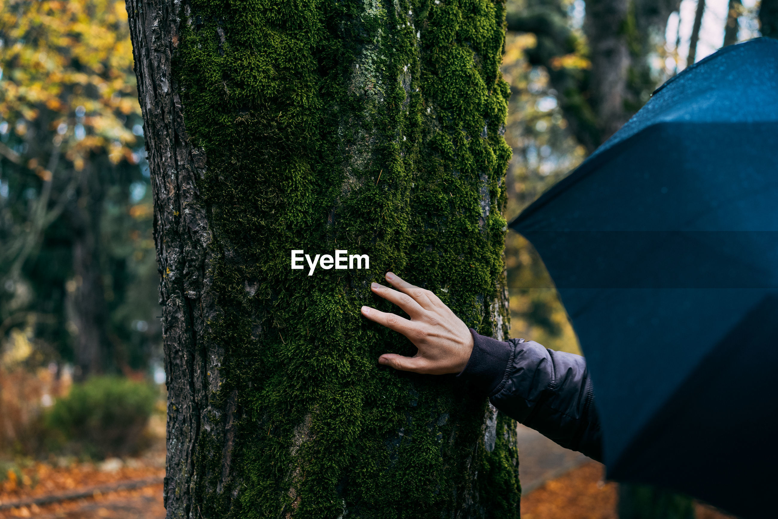 Cropped hand of person with umbrella against tree
