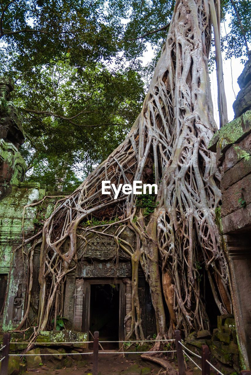 tree, religion, spirituality, history, place of worship, architecture, old ruin, built structure, ancient, root, day, low angle view, building exterior, travel destinations, tree trunk, growth, outdoors, no people, ancient civilization, architectural column, branch, nature, sky