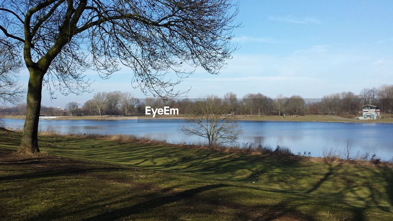 water, tree, plant, lake, sky, tranquil scene, tranquility, scenics - nature, beauty in nature, grass, nature, no people, green color, bare tree, day, non-urban scene, growth, outdoors