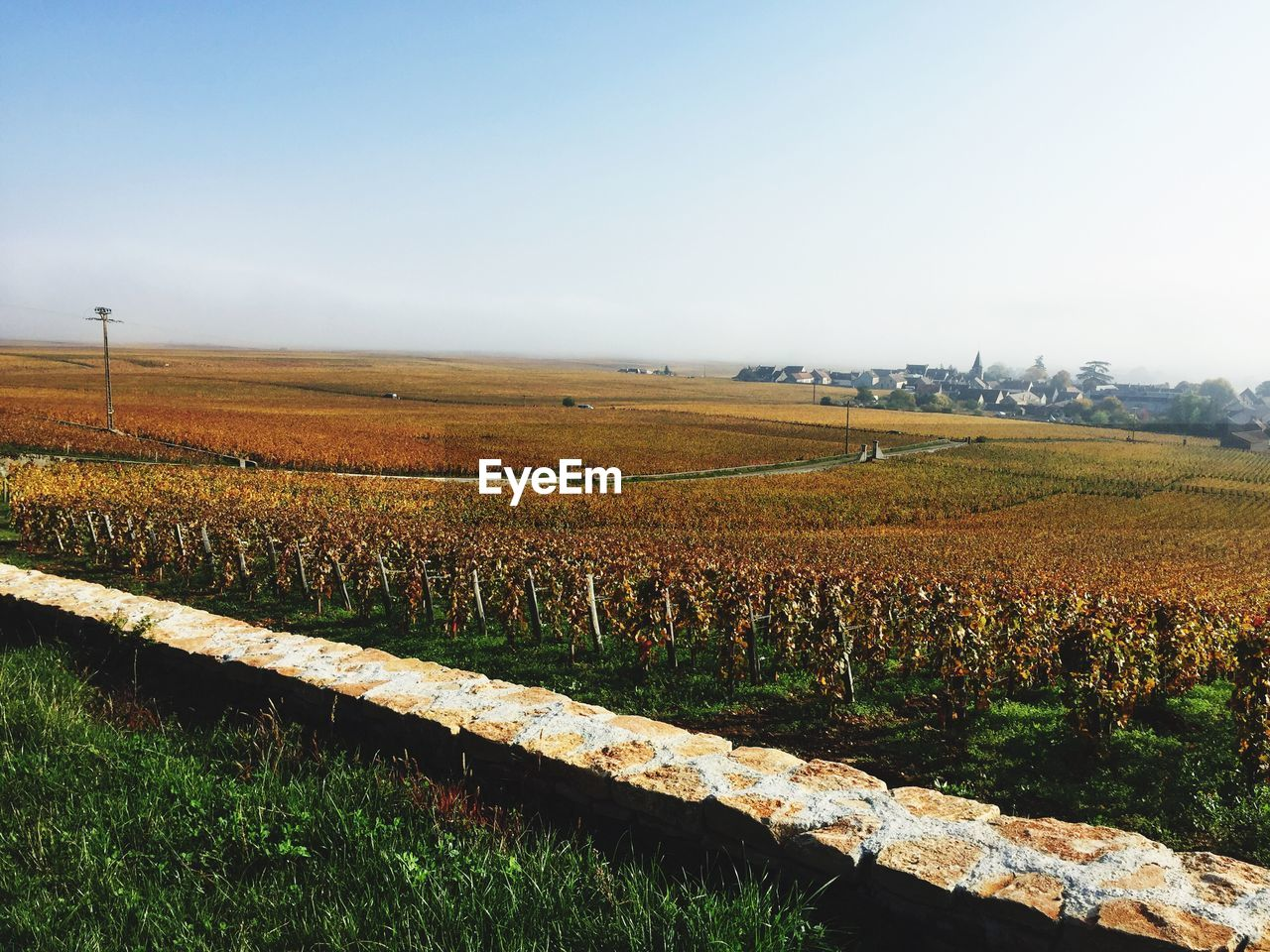 landscape, land, sky, field, environment, agriculture, tranquility, tranquil scene, rural scene, scenics - nature, beauty in nature, plant, growth, nature, day, farm, no people, crop, vineyard, copy space, outdoors, plantation, winemaking