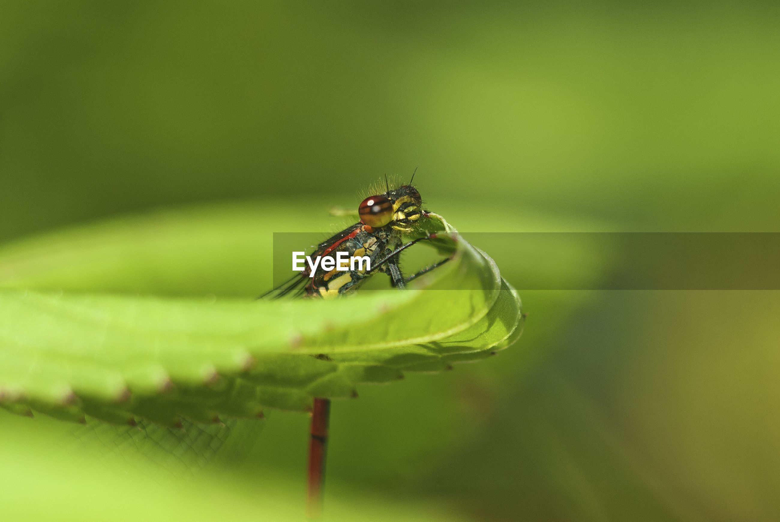 Close-up of insect on green leaf