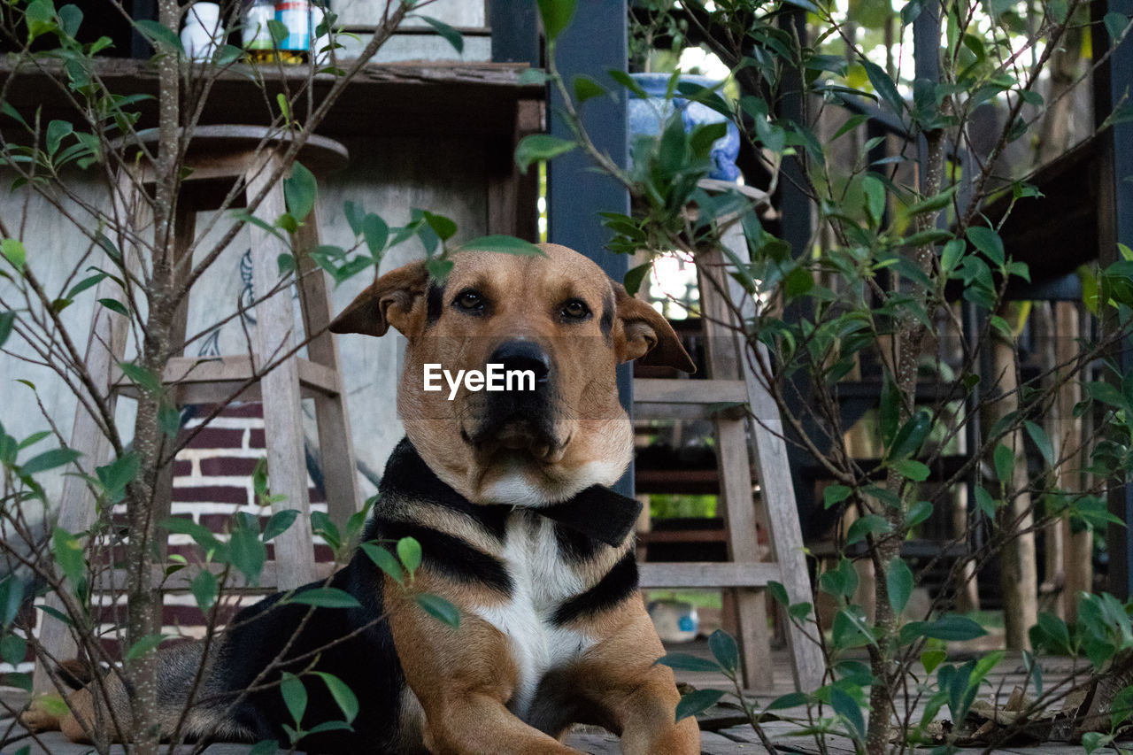 one animal, mammal, animal themes, animal, canine, dog, domestic, domestic animals, pets, vertebrate, portrait, plant, looking at camera, no people, day, nature, tree, outdoors, front or back yard, growth, animal head