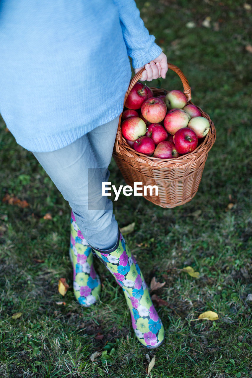 Low Section Of Woman Holding Wicker Basket With Apples On Grassy Field