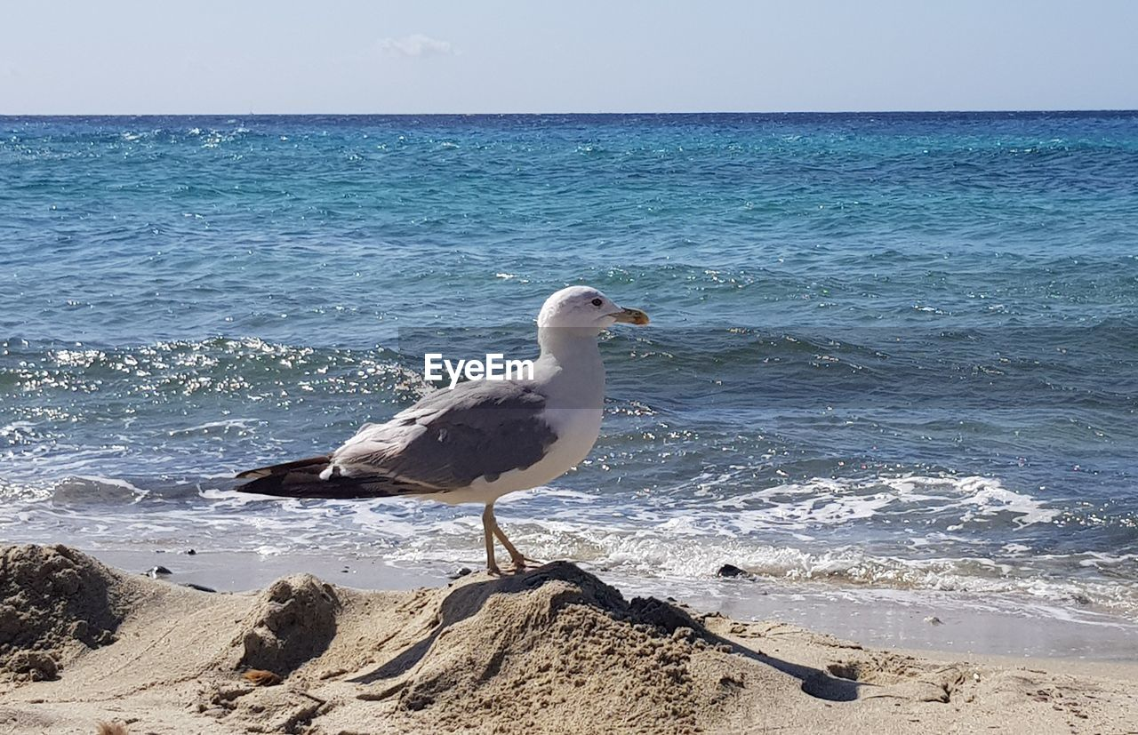 sea, water, horizon over water, horizon, beach, sky, land, animal themes, bird, vertebrate, beauty in nature, animal, animals in the wild, scenics - nature, animal wildlife, seagull, one animal, nature, day, no people