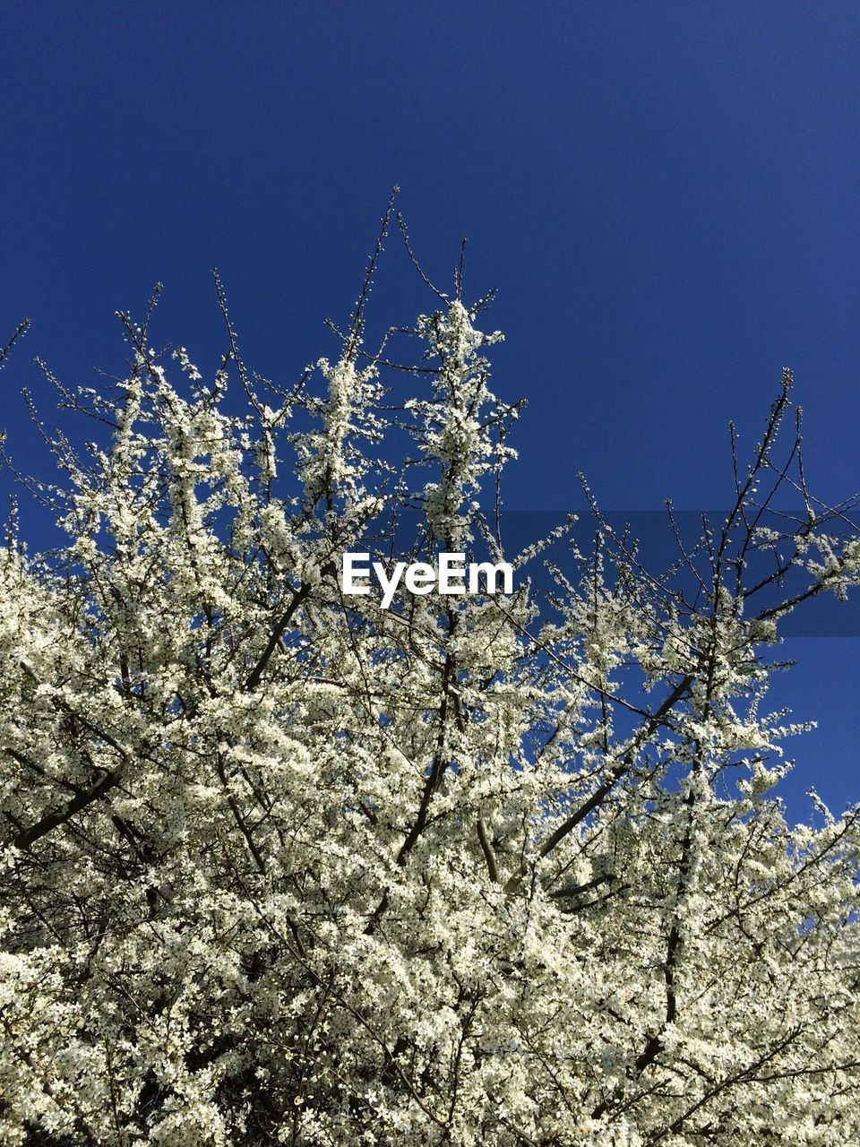 flower, growth, nature, low angle view, beauty in nature, no people, freshness, fragility, blue, clear sky, blossom, springtime, day, outdoors, plant, tree, branch, close-up, sky