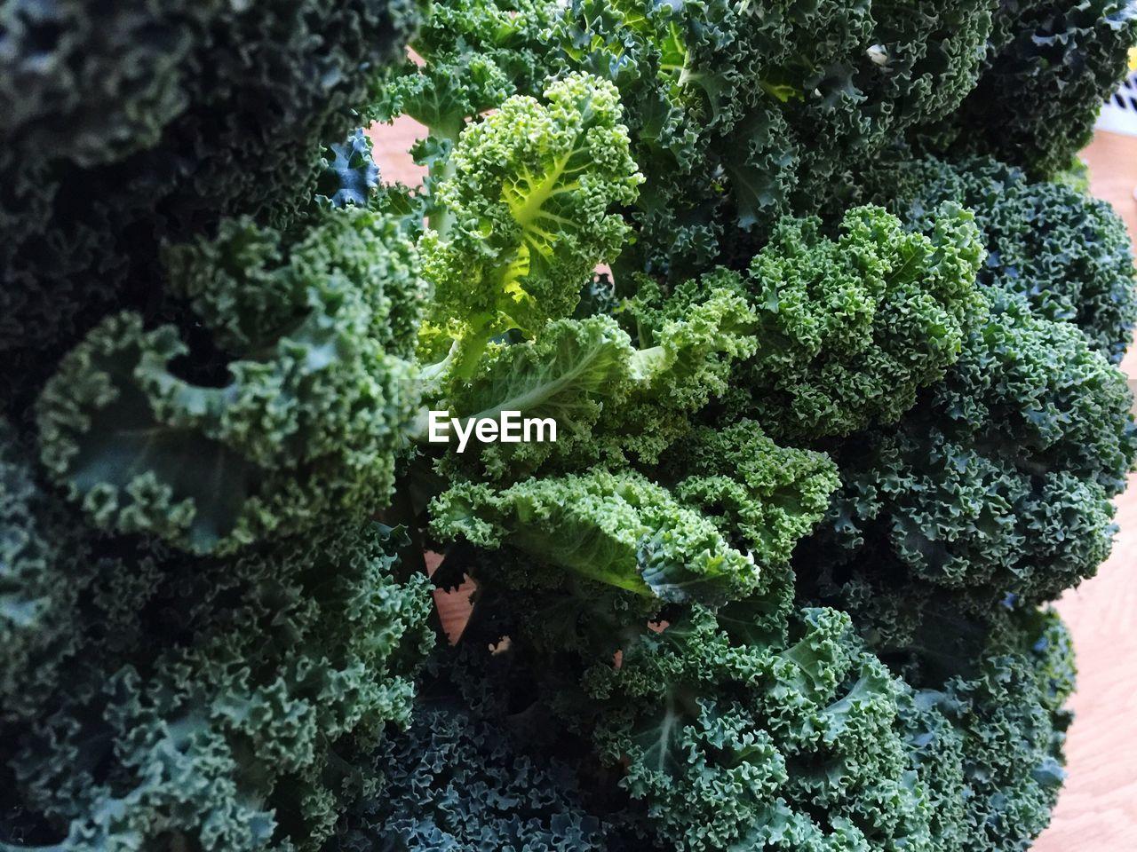 Close-up of fresh kale