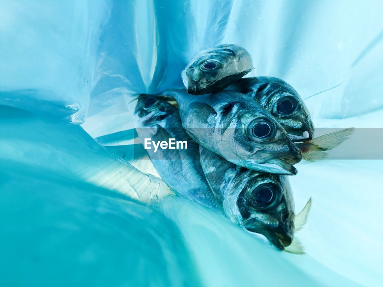 Close-Up Of Fish In Plastic Bag