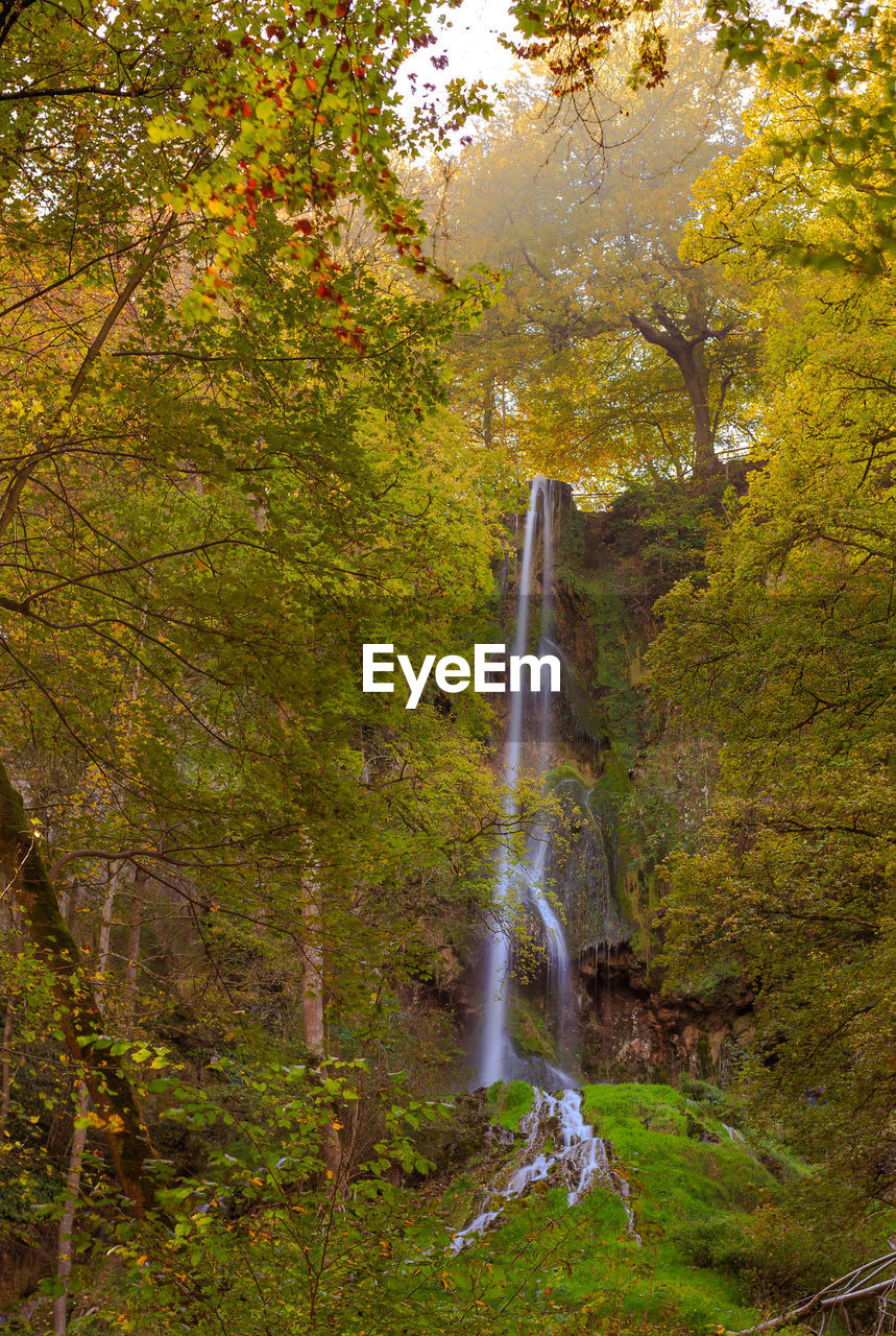 waterfall, tree, nature, scenics, beauty in nature, forest, no people, water, green color, outdoors, leaf, autumn, moss, day, freshness, sky