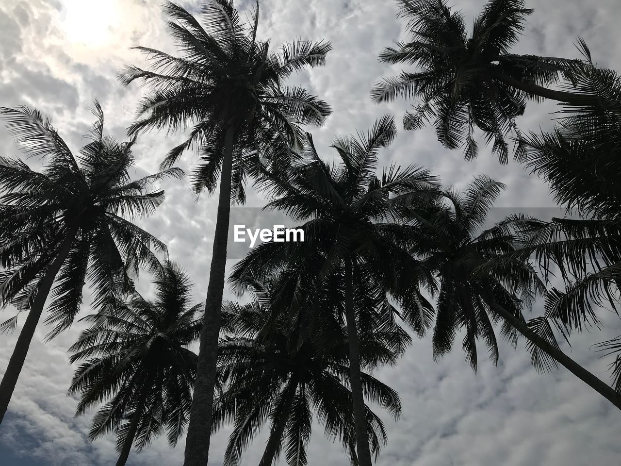 palm tree, tree, low angle view, nature, tree trunk, beauty in nature, sky, growth, no people, outdoors, scenics, tranquility, day, close-up