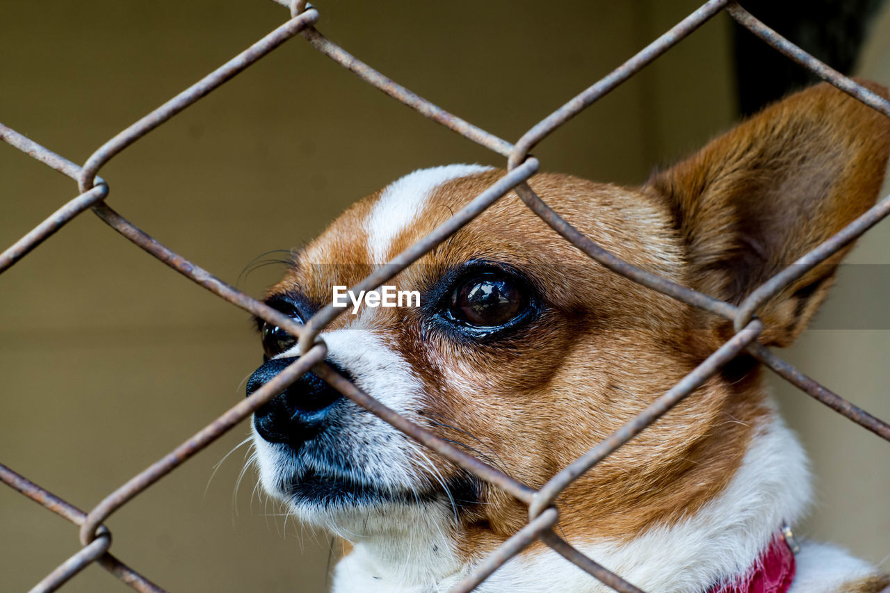 dog, chainlink fence, one animal, pets, domestic animals, mammal, animal themes, puppy, metal, outdoors, close-up, focus on foreground, day, protection, no people