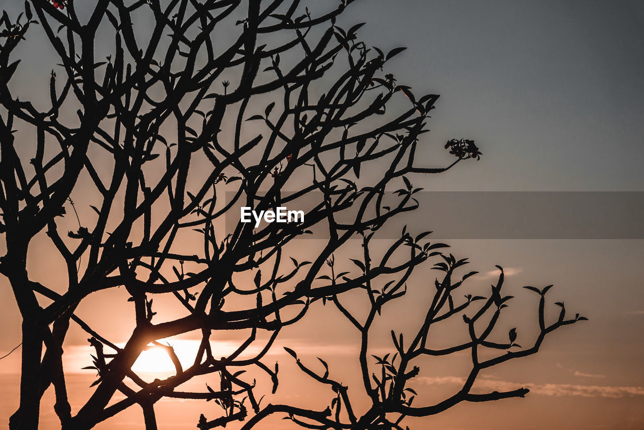 sky, tree, branch, bare tree, silhouette, plant, beauty in nature, low angle view, sunset, nature, no people, tranquility, dusk, growth, outdoors, scenics - nature, clear sky, non-urban scene, tranquil scene, dead plant