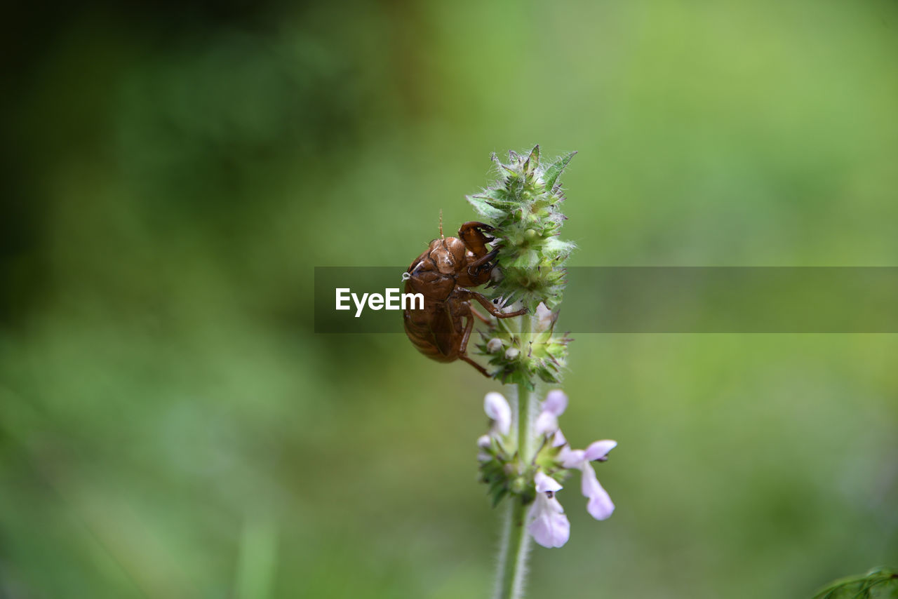 insect, one animal, animal themes, animals in the wild, nature, plant, fragility, no people, growth, flower, focus on foreground, day, animal wildlife, beauty in nature, outdoors, pollination, close-up, freshness