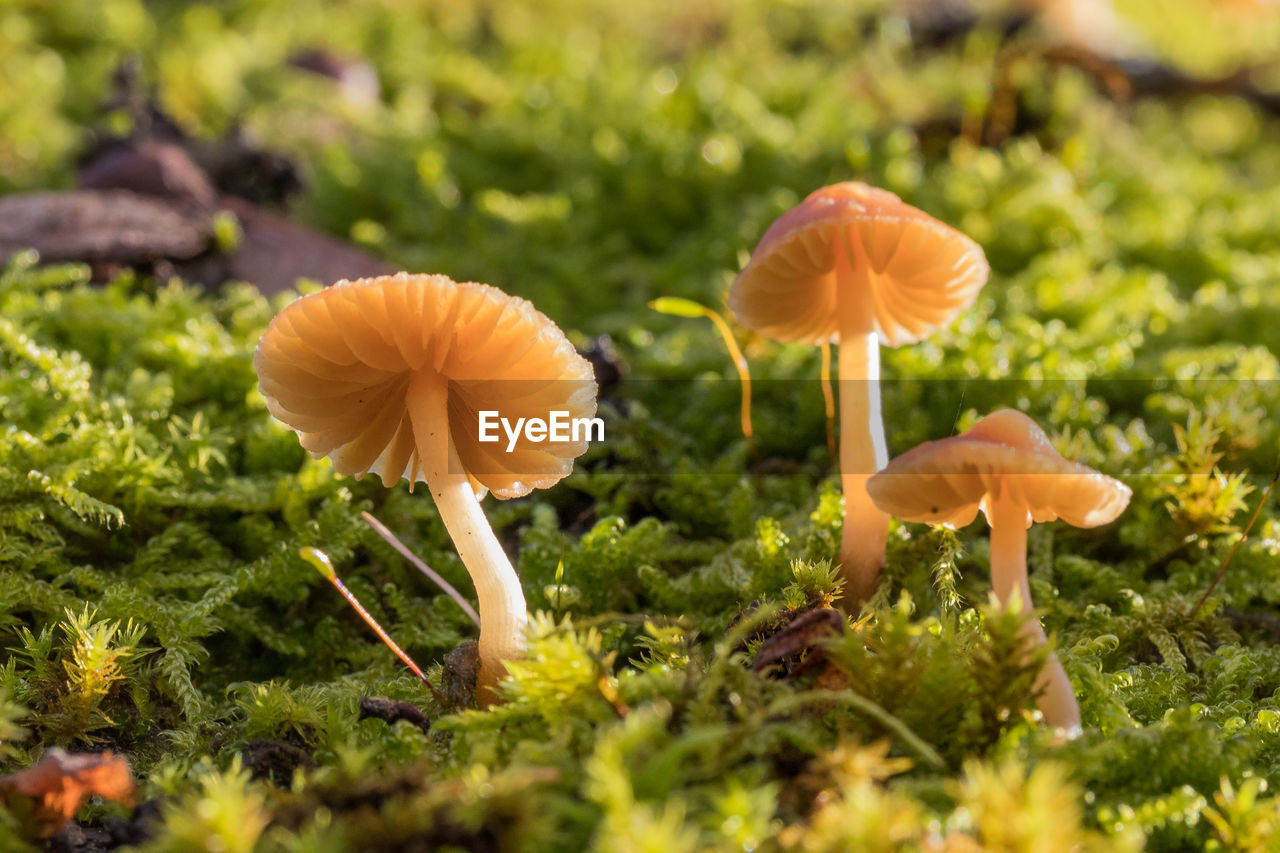 mushroom, growth, fungus, nature, toadstool, beauty in nature, fragility, close-up, freshness, fly agaric, plant, no people, field, outdoors, flower head, day