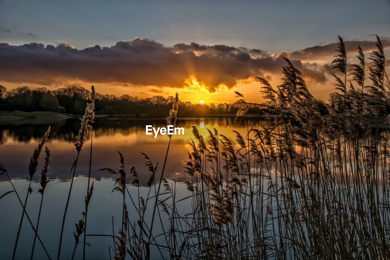 sunset, sky, beauty in nature, tranquility, water, scenics - nature, tranquil scene, lake, reflection, plant, cloud - sky, non-urban scene, no people, idyllic, silhouette, orange color, nature, sun, growth, outdoors, reflection lake