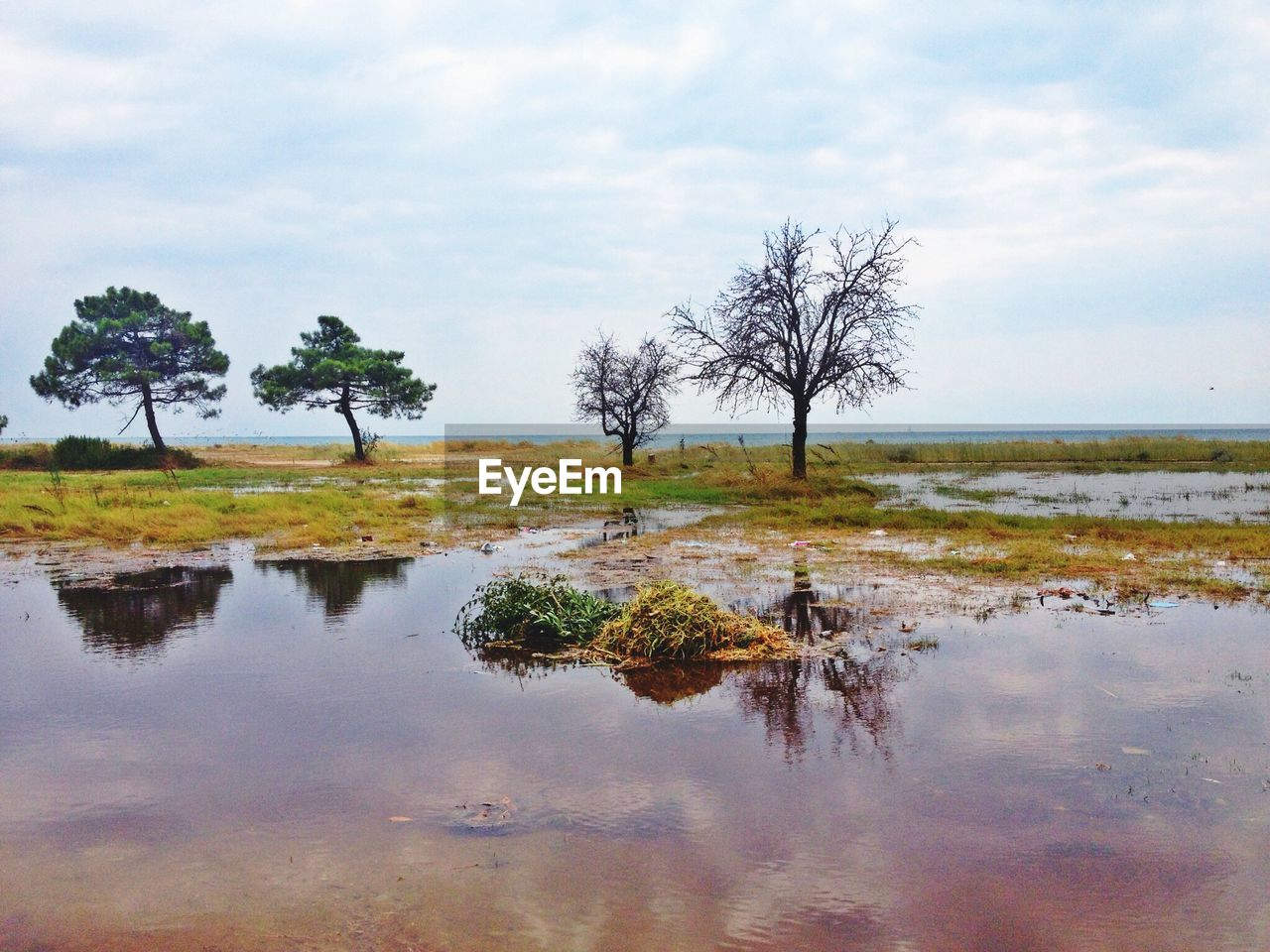 tree, reflection, tranquility, nature, water, tranquil scene, landscape, remote, sky, beauty in nature, outdoors, scenics, lake, no people, lone, day, branch, grass