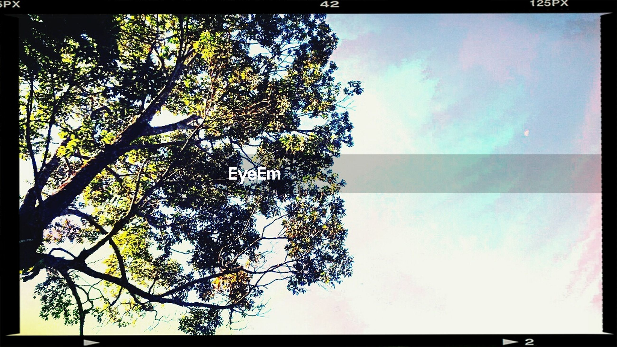 transfer print, auto post production filter, low angle view, tree, branch, growth, sky, nature, beauty in nature, tranquility, day, blue, high section, no people, outdoors, leaf, clear sky, scenics, cloud - sky, frame