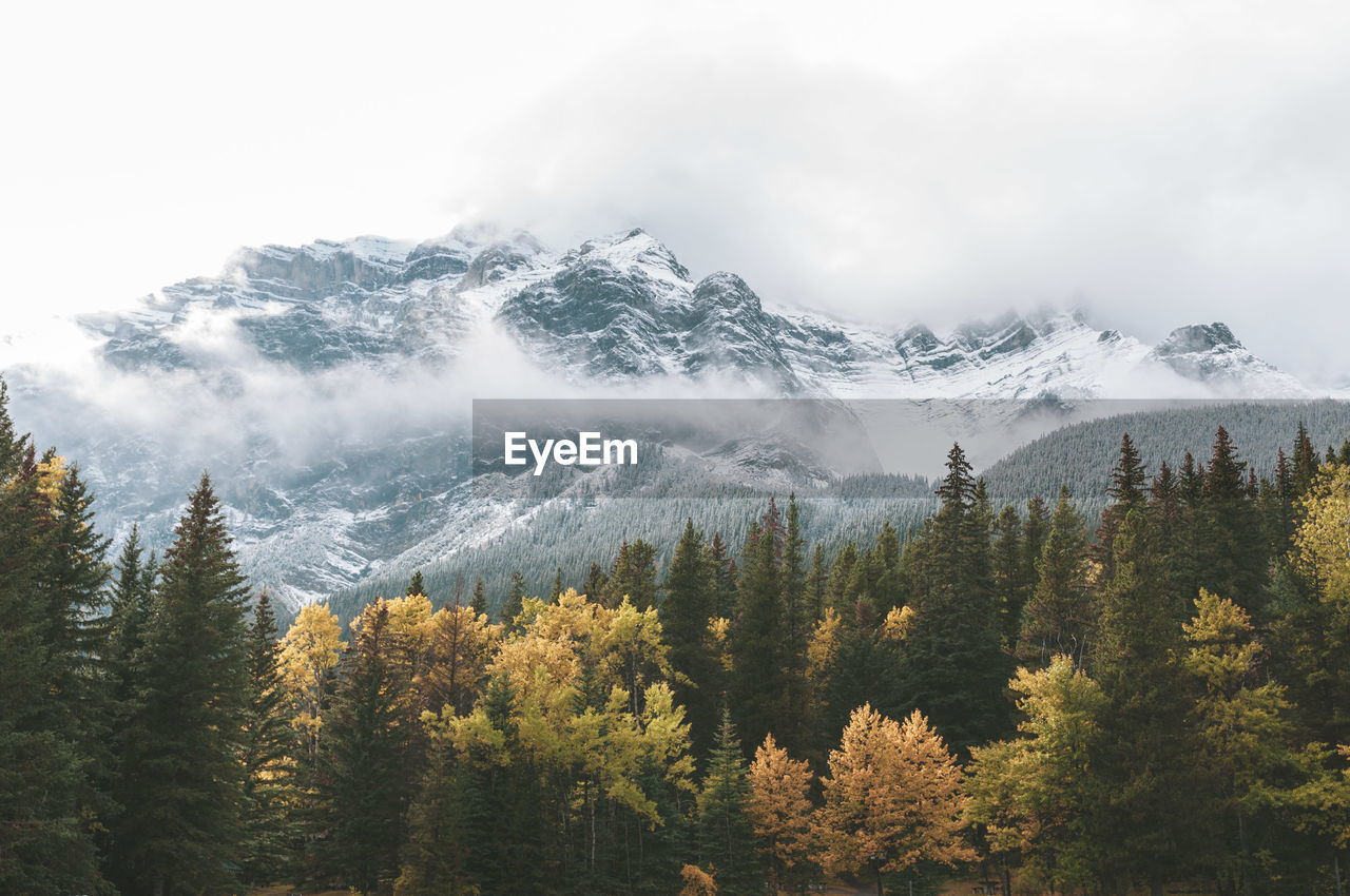 Scenic View Of Trees And Snowcapped Mountains Against Sky