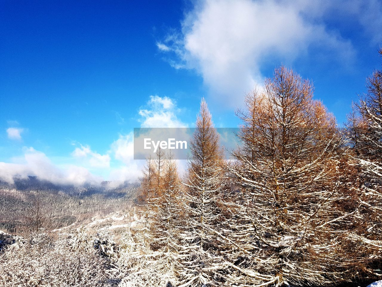 nature, beauty in nature, tranquility, snow, sky, tree, tranquil scene, winter, day, cold temperature, outdoors, landscape, no people, cloud - sky, scenics, bare tree, blue