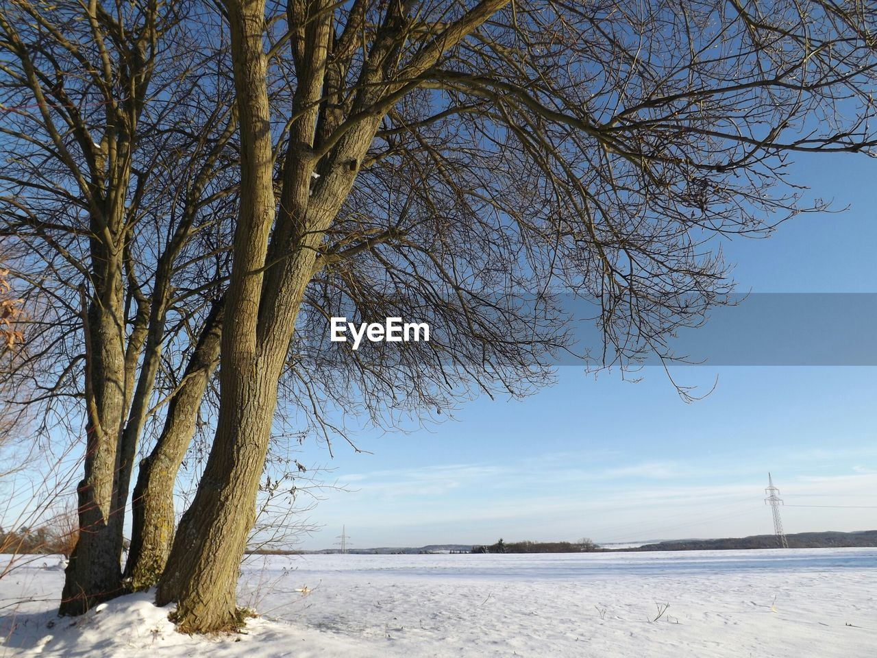 Low angle view of bare trees on snowcapped landscape during winter