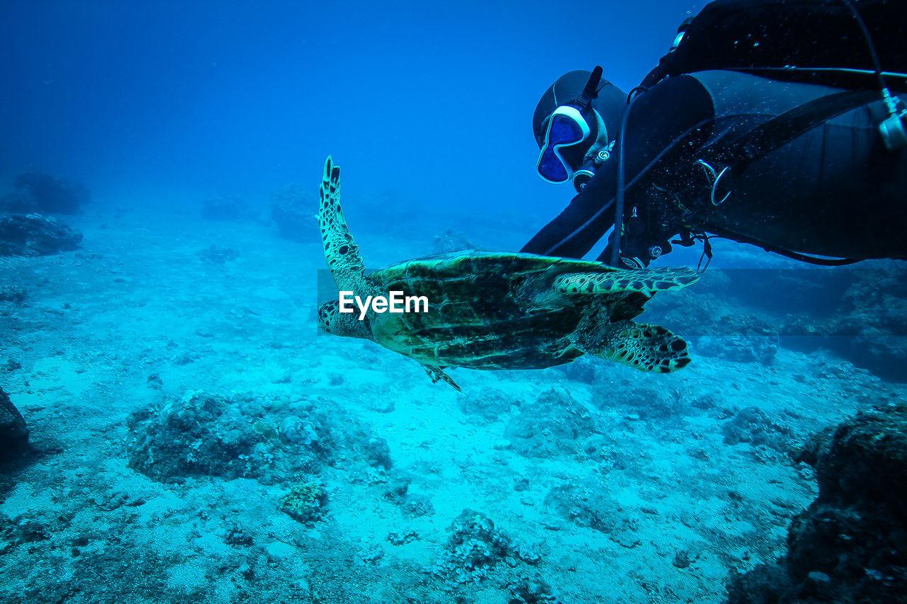 Scuba Diver Swimming With Green Turtle In Sea