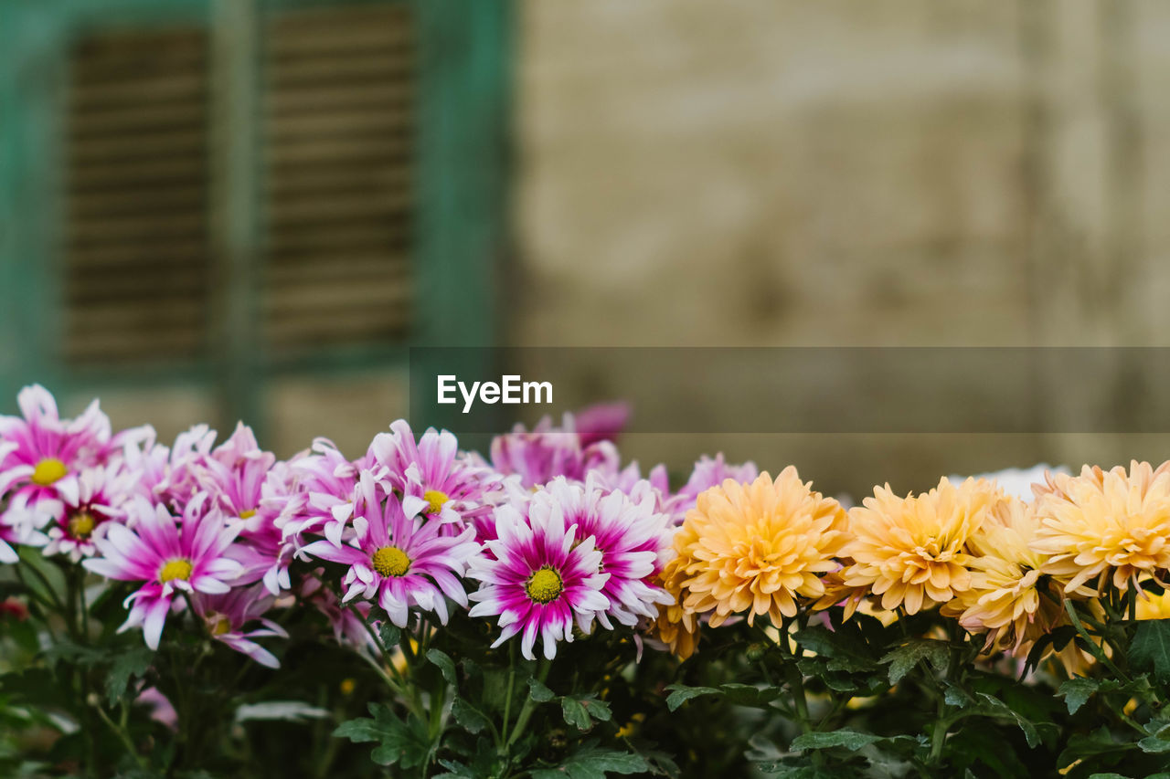 flower, freshness, fragility, beauty in nature, nature, day, petal, growth, focus on foreground, plant, close-up, outdoors, no people, flower head, blooming