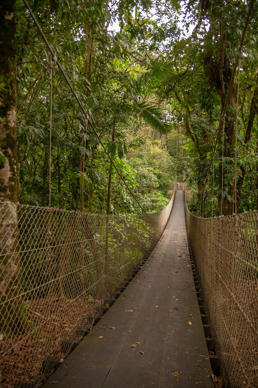 the way forward, direction, plant, tree, forest, nature, no people, growth, footpath, connection, land, diminishing perspective, tranquility, green color, footbridge, outdoors, bridge, day, beauty in nature, lush foliage